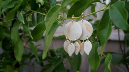 A pair of dangle earrings hang from a green vine. They have a circle core. Three leaf-like shapes hang down from the circle. The color is a modgepodge of a pearly cream and tan-tinted translucent.